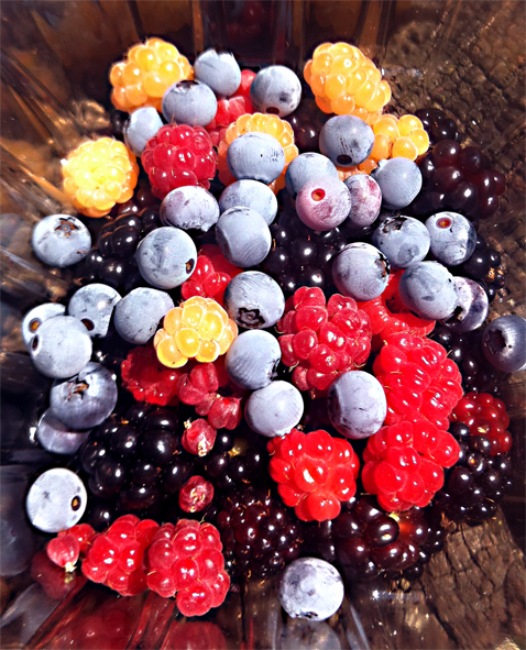 What would you do if your raspberries wanted to mix it up with your blueberries or blackberries?