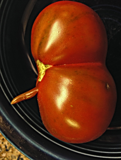 Profile photo: is this Richard Nixon reincarnated as a tomato?