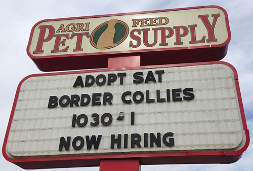 The blathering idiot had always wanted to adopt Saturdays.