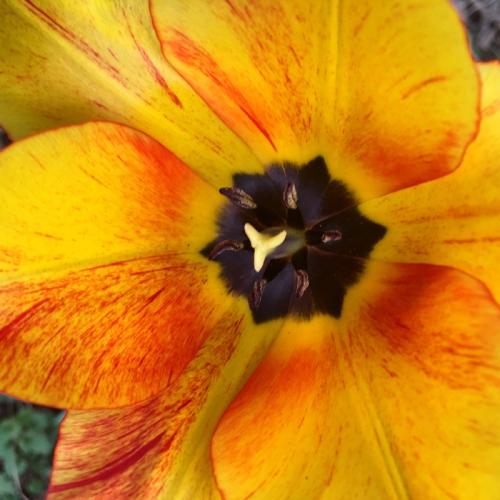 Flower 100dpi_7x7_4c_5320