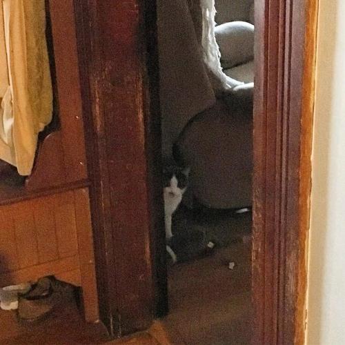 hiding cat 120dpi_8x8_4c